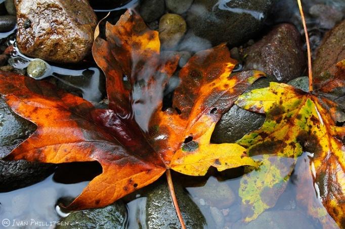 Fall C